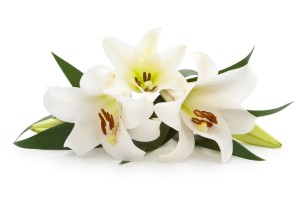 lily funeral obituary
