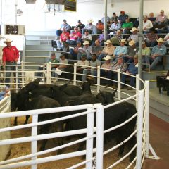 Producers Sell Over 6,000 Head of Cattle at May NETBIO Sale