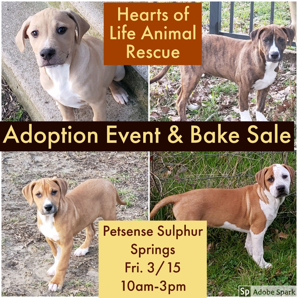 Hearts of Life Animal Rescue Adoption Event and Bake Sale
