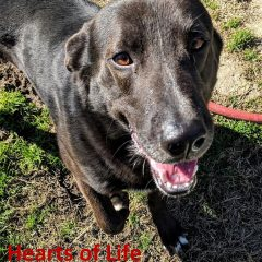 Hearts of Life – CeCe Needs a Home